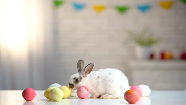 spielerische pelzigen kaninchen sitzen am tisch mit bunten eiern, ostern symbol, urlaub - osterhase stock-videos und b-roll-filmmaterial