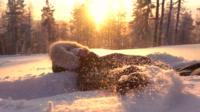 SLOW MOTION Playful girl making snow angels in fresh snow at golden light sunset video