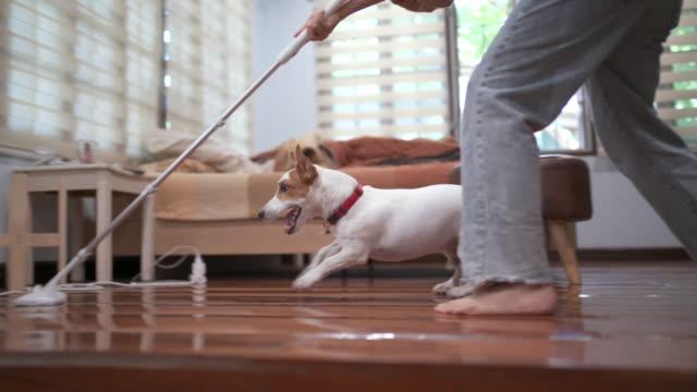 eğlenceli jack russell terrier oynarken ve temizlik ev işleri yaparken çalışan - ev temizleme stok videoları ve detay görüntü çekimi