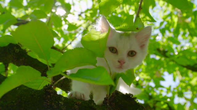 LENS FLARE: Playful kitten looks at the camera while climbing around the tree.