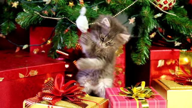 Playful kitten under a Christmas tree