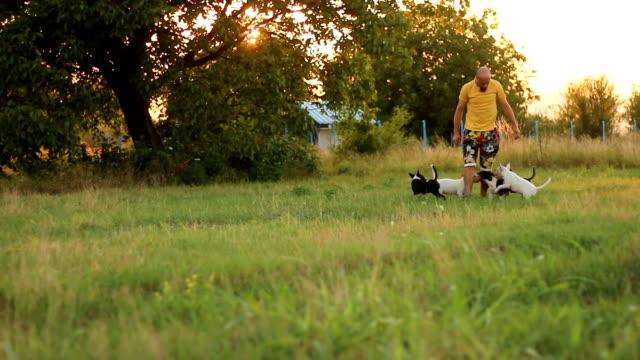 遊び心のあるペットと飼い主 - 愛玩犬点の映像素材/bロール