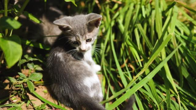 playful stray kittens in the grass - кошка смешанной породы стоковые видео и кадры b-roll