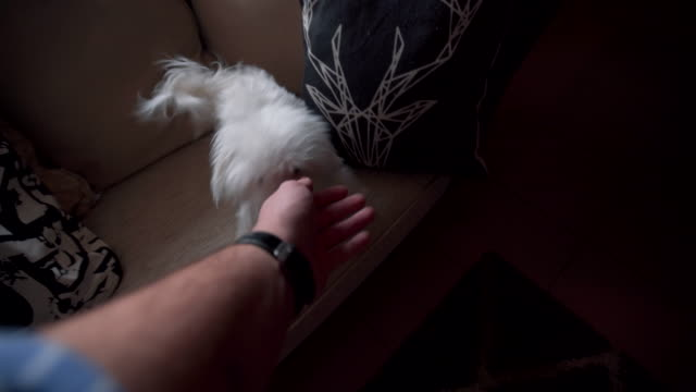 Playful time with my pets