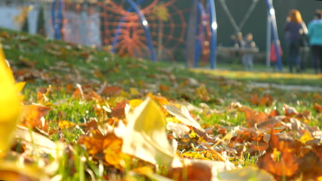 Playground people relax Autumn park, forest trees. Fallen leaves video