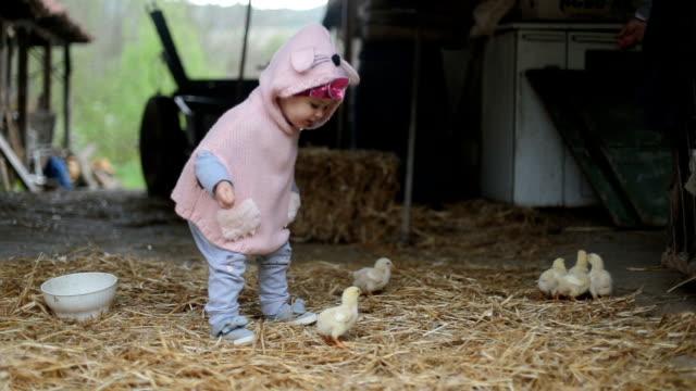 oynama ve küçük tavuk kuş dokunmaktan - ahır stok videoları ve detay görüntü çekimi