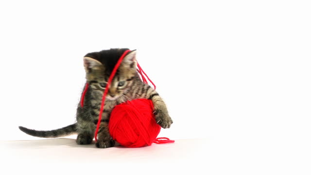 Playing Cat Baby cat playing with wool. kitten stock videos & royalty-free footage