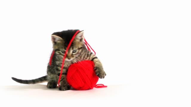 stockvideo's en b-roll-footage met playing cat - kitten