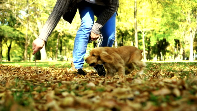 Playing in a park colored with autumn colors video
