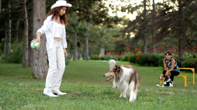 gioco per animali - cane addestrato video stock e b–roll