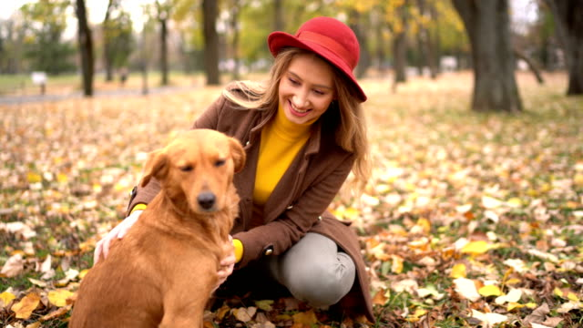 Playing with a dog at beautiful autumn day - vídeo
