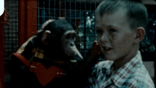 Playing with Chimp Archival video