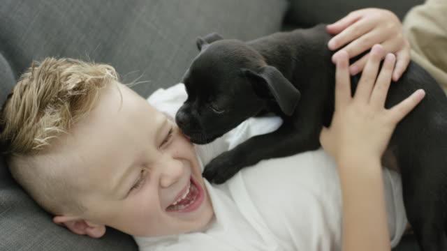彼の犬と遊ぶ - イヌ科点の映像素材/bロール