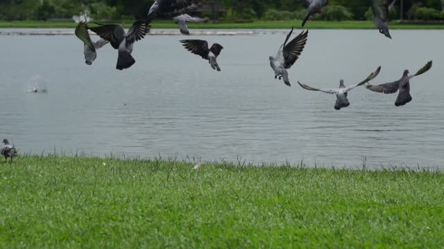 Plenty of birds fly out of the lake to the food source in nature.