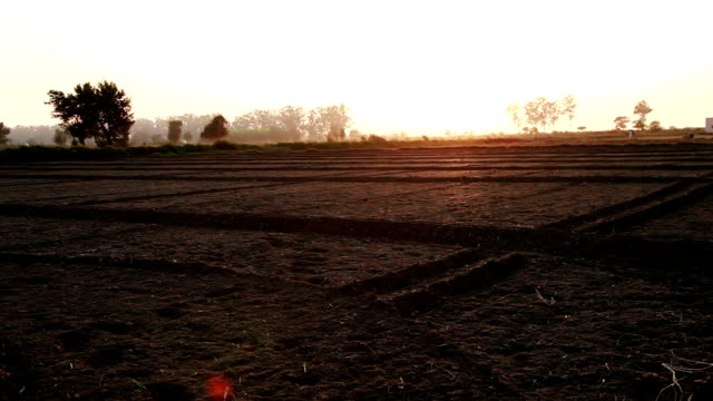 plowed field during sunset - haryana video stock e b–roll
