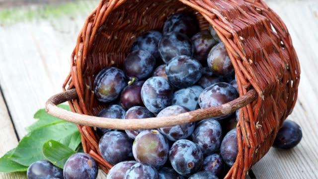 Plum harvest. Plums in a wicker basket on wooden background. Plum harvest. Plums in a wicker basket on wooden background. Harvesting fruit from the garden. plum stock videos & royalty-free footage
