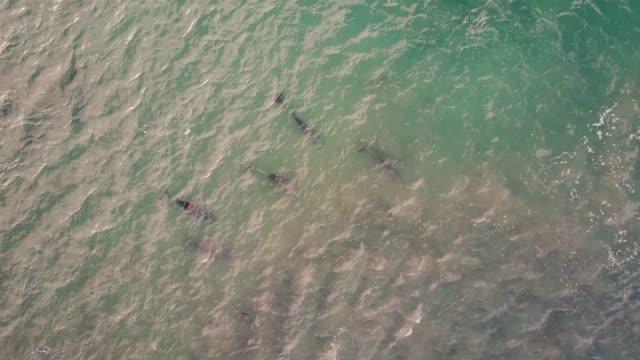 イルカの海、空撮で狩猟のポッド。 - 大西洋点の映像素材/bロール