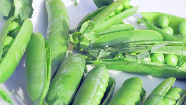 vídeos de stock e filmes b-roll de pods peas close up. perspective natural meat substitutes. raw materials for the production of artificial meat. bean and soy protein. healthy organic food - formato bruto
