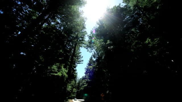 sicht fahren zwischen riesigen redwood trees - staatspark stock-videos und b-roll-filmmaterial
