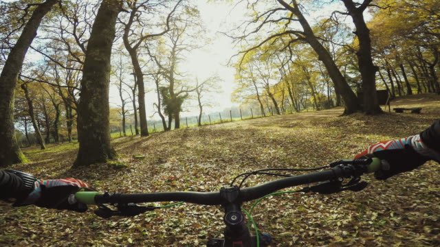 Point of view POV mountainbike in autumnal forest video