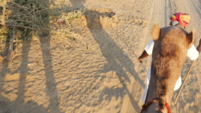 Point of View of a ride of camel in sand dunes in the desert video