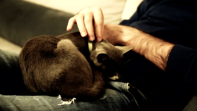 Point of view of man relaxing and stroking pet cat video