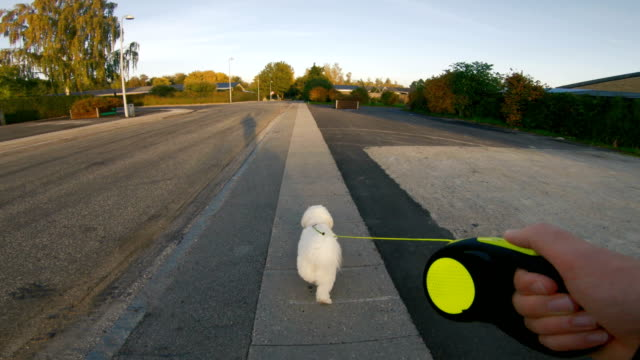 Point of view of man taking his his dog for a walk Personal perspective (POV) seen from a man walking with his dog on a sidewalk. The man holds on to a pet leash attached to the dog. The dog is white. angle stock videos & royalty-free footage