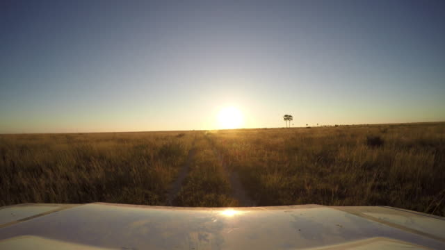Point of view of safari vehicle driving through the bush in Botswana Point of view of safari vehicle driving through the bush in Botswana botswana stock videos & royalty-free footage