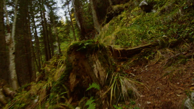 Point of view shot running through mountain forest Point of view shot running through mountain forest action movie stock videos & royalty-free footage