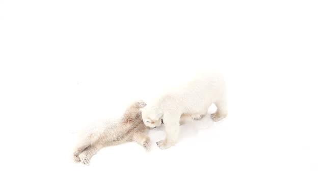 Polar bear cub video