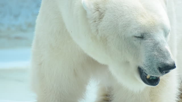 polar bear - bear stock videos and b-roll footage