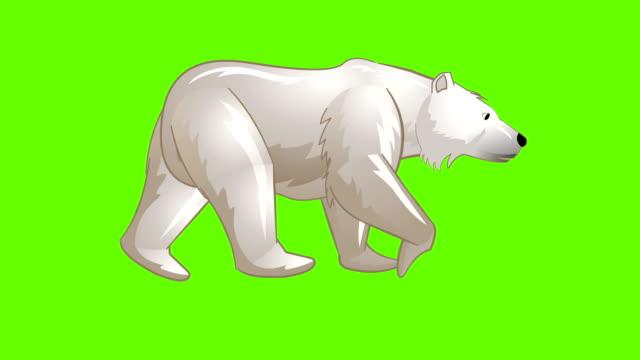 Polar Bear walk cycle animation Polar Bear Walk cycle animation, loop animation sequence with green screen, free stock without watermark stock videos & royalty-free footage
