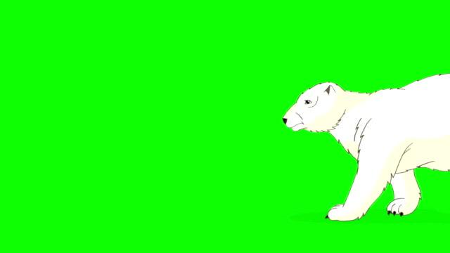 vídeos de stock e filmes b-roll de polar bear walks  chroma - teddy bear