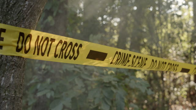 Police Detectives Crime Scene Tape in Woods Police crime scene with do not cross tape in the woods with morning mist or fog in the air. crime scene stock videos & royalty-free footage