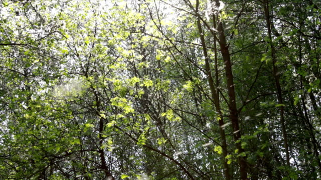 Pollen and tree leaves in the forest