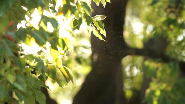 pollen from trees - pollen bildbanksvideor och videomaterial från bakom kulisserna