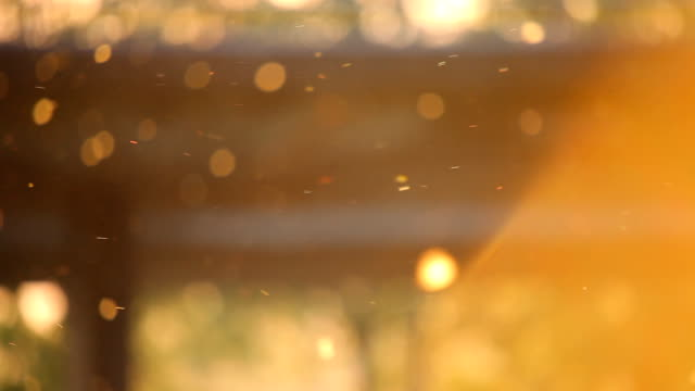 Pollen out focus on spring sunset Pollen flying out focus on spring sunset pollen stock videos & royalty-free footage