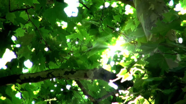 Pollens and Sunbeams Flying pollens, swaying leaves and sunbeams - 1080 HD pollen stock videos & royalty-free footage