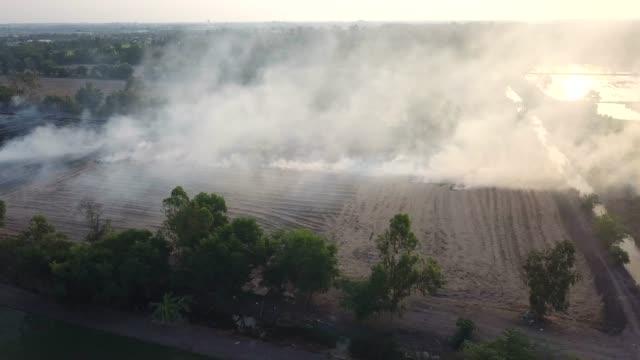 pollution: burning fire in the field - incendio doloso video stock e b–roll