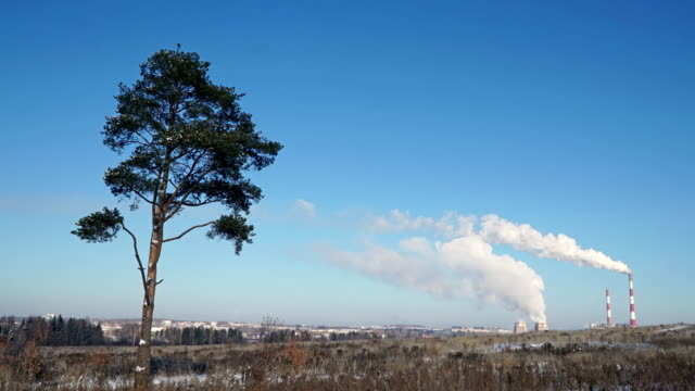 Pollution of the environment. Smoke from factory chimneys and lonely tree in a field video