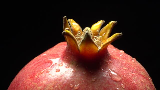 vídeos de stock e filmes b-roll de pomegranate fruit in delicate rotation - romã