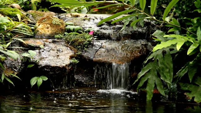 pond and waterfall in the garden, chiangmai thailand - пруд стоковые видео и кадры b-roll