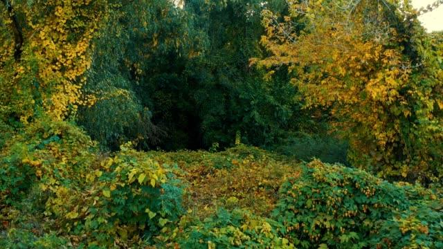 vídeos de stock e filmes b-roll de pond in a hilly forest - hera trepadeira