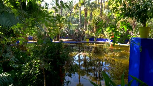 stagno nel giardino botanico e paesaggistico dell'artista majorelle. marrakech, marocco. 4k, uhd - giardino pubblico giardino video stock e b–roll