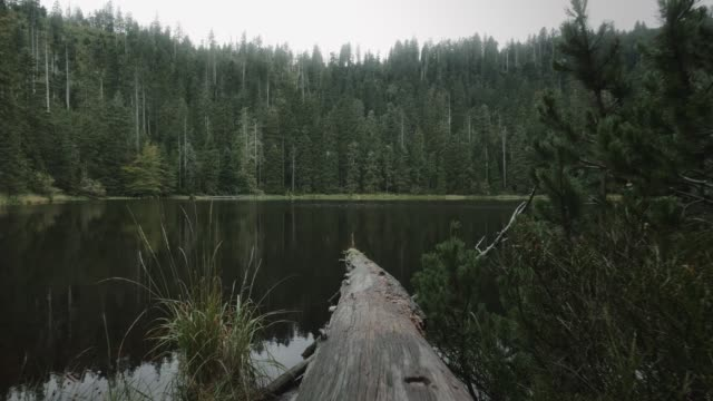 pond in middle of forest - albero caduto video stock e b–roll