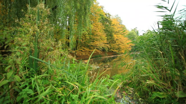 Pond in park with golden leaves video