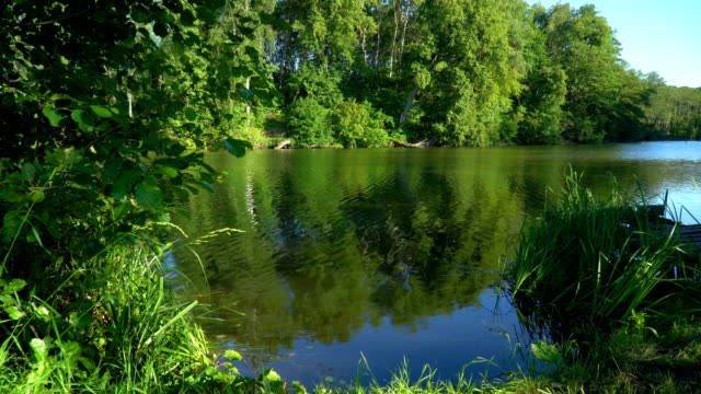 森の池 - 湧水点の映像素材/bロール
