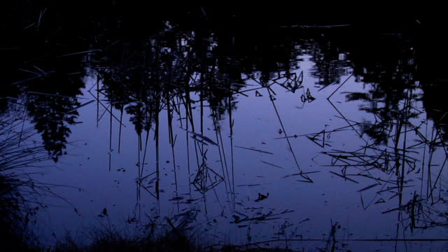 pond reflection night - pond stock videos & royalty-free footage