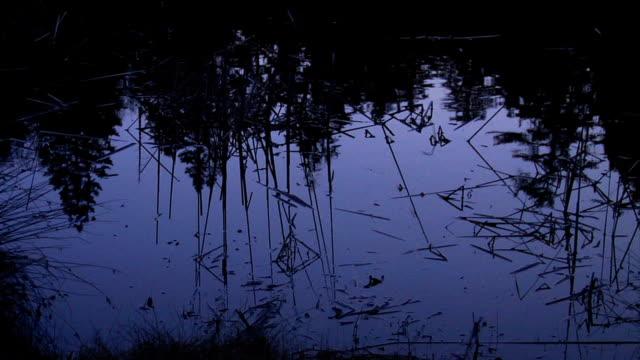 vídeos y material grabado en eventos de stock de estanque de reflexión noche - charca