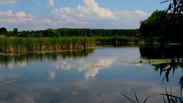 vídeos y material grabado en eventos de stock de estanque - estrecho